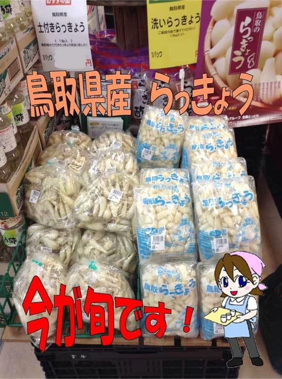 キャビック株式会社のブログ-鳥取県産のらっきょうは今が旬!