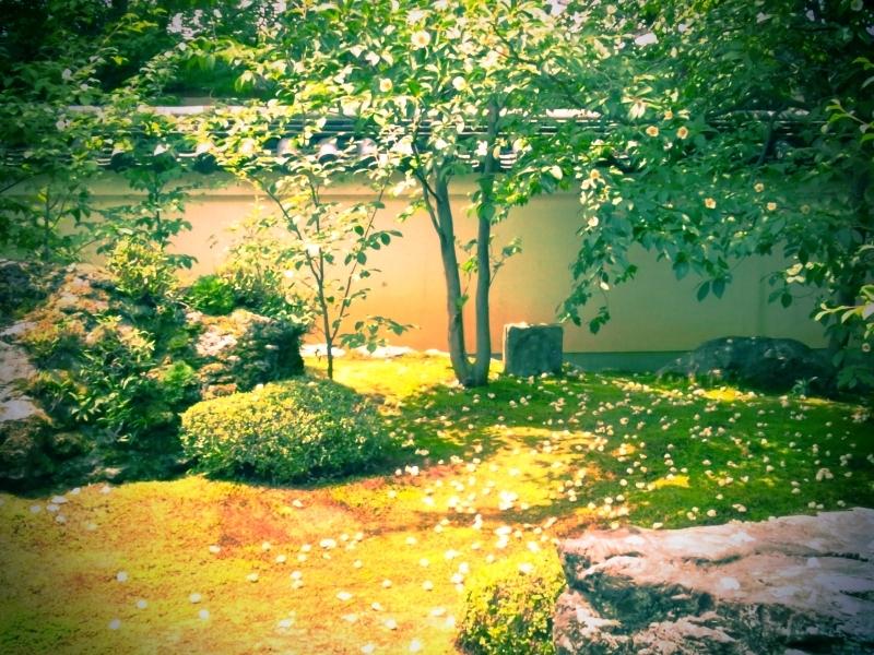 キャビック株式会社のブログ-沙羅双樹