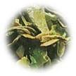 キャビック株式会社のブログ-ファーストフラッシュ2